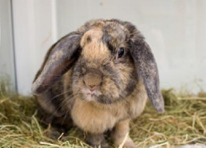 bunny-mayhewanimalhome.jpg
